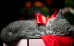 Adorable Christmas Bow Wallpaper 42843