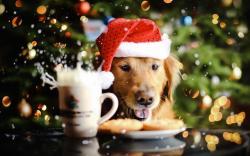 Adorable Holiday Wallpaper 31572