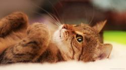 ... Adorable Cat with Brown Eyes Looking Up Wallpaper for 1920x1080