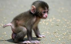 Baby Monkey beautiful