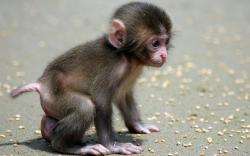 Baby Monkey beautiful