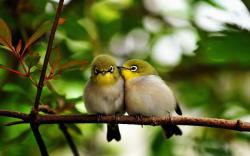 Adorable Pictures of Birds