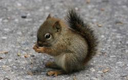 Adorable Little Squirrel wallpaper