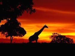 Wallpaper Information: Africa 517