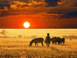 Description: The Wallpaper above is Zebras Sunrise Africa Wallpaper in Resolution 1600x1200. Choose your Resolution and Download Zebras Sunrise Africa ...