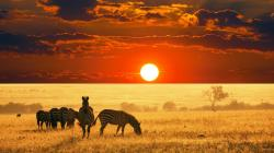 That being said, here are five different places that you should check out on your next safari adventure to Africa.