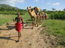 Man leading camel at Karisia, Africa.