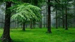 ... Download Wallpaper Spruce Forest After The Rain 1920 X 1080 Hdtv After Rain Wallpaper ...