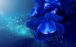 Amazing Blue Rose Wallpaper