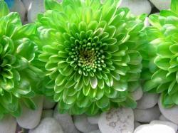 Nice green flower amazing wallpaper