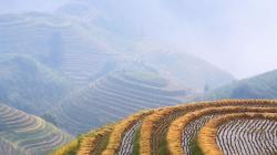 Amazing Harvest Pictures 37760