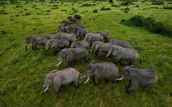 Amazing Herd Wallpaper 42796