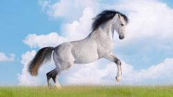 Amazing Horse Wallpaper 14843