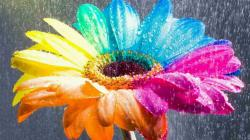 Amazing Nice Colorful Rainbow Flower HD Wallpapers. Added On ...