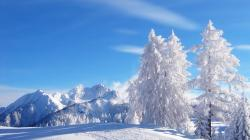 Amazing Snow Trees Wallpaper 13720