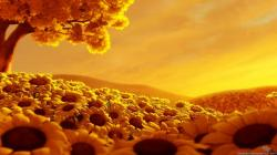 Amazing Sunrise Sunflower Fields Wallpaper #78568 - Resolution 1366x768 px