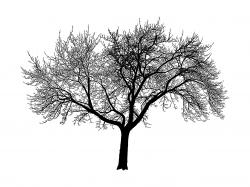 free tree silhouettes - Google Search--Print off tree silhouettes and frame for baby