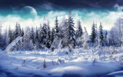 Amazing Winter On The Forest Wallpaper Desktop Wallpaper