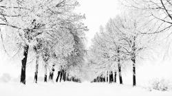 1920x1080 Amazing Winter snow woods world photography wide wallpapers:1280x800,1440x900,1680x1050 -