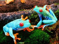 Amphibians · Amphibians · Amphibians · Amphibians ...