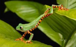 creepychan amphibians frogs lemur ...