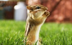 Fascinating Animal Wallpapers: Marvelous Cute Little Squirrel Pray To God On The Green Grass Blur Backgrounds Wallpapers 1920x1200px
