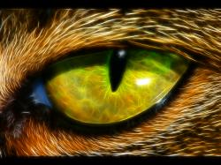 Fractal Animal Eye Wallpaper 1600x1200