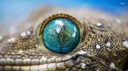 ... Lizard eye wallpaper 1920x1080 ...