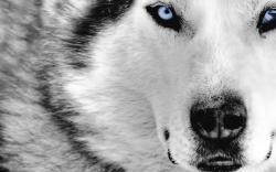 animal-wallpaper-02.jpg ...