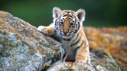 Share baby animal wallpaper Wallpaper gallery to the Pinterest, Facebook, Twitter, Reddit and more social platforms. You can find more drawings, paintings, ...