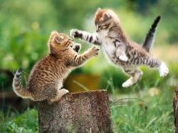 HD Wallpaper   Background ID:5726. 1600x1200 Animal Cat