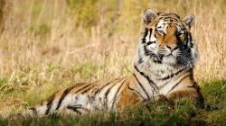 Animal Wallpapers · Animal Wallpapers ...