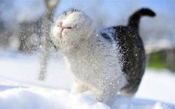 Animals cats outdoors snow 1920x1200
