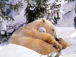 Snow Animals Polar Bears Baby Animals Fresh New Hd Wallpaper