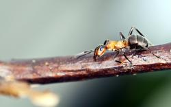 Ant Branch Nature Macro Photo