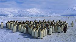 Antarctica. By Isaac Schiller