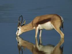 antelope hq wallpaper