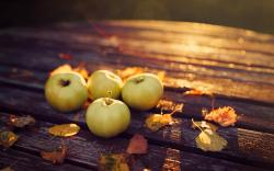 Apples Leaves Autumn Evening