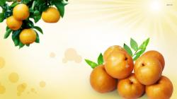 Apricot wallpaper Apricot wallpapers HD free - 290898