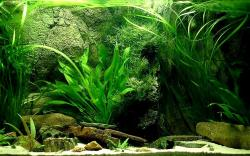 ... diy aquarium backgrounds ...