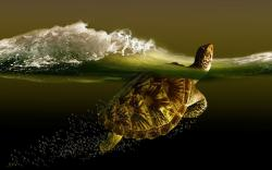 Turtle Water Art HD Wallpaper