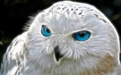 Art White Owl blue Eyes