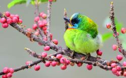 Asian woodpecker
