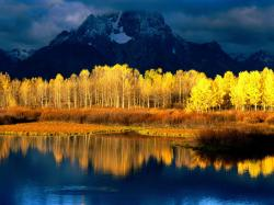Quaking aspen trees free wallpaper in free desktop backgrounds category: Aspen-trees-wallpapers.