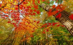 Autumn colored branches