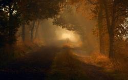 Autumn dim forest road