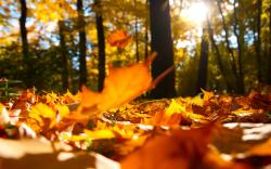 Autumn falling leaves ground