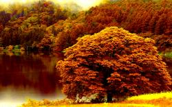 Hd Autumn Forest Lake Wallpaper Download Free Xpx 1920x1200px