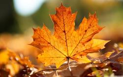 Autumn Leaf Pics