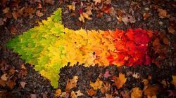 Autumn leaves arrow Wallpaper in 1920x1080 HD Resolutions